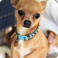 Adopt A Pet :: Bruiser - Morganville, NJ