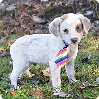Adopt A Pet :: Jones - Denver, CO