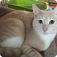 Adopt A Pet :: Sandy - Columbus, OH
