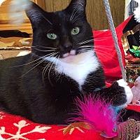 Adopt A Pet :: Pocahontas - Tampa, FL
