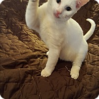 Adopt A Pet :: Xavier - Ocala, FL
