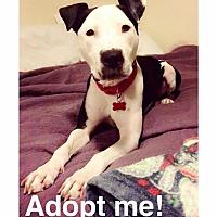 Adopt A Pet :: Petey - Des Moines, IA