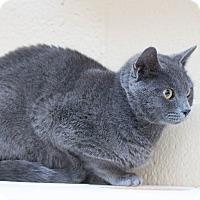 Adopt A Pet :: Jackie - Chula Vista, CA