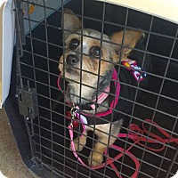 Adopt A Pet :: Lilly- Adoption Pending! - Hillsboro, IL