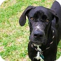 Adopt A Pet :: Tris - Austin, TX