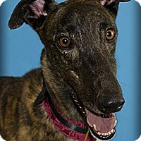Adopt A Pet :: Ernesto - Seattle, WA