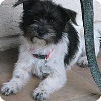 Adopt A Pet :: Milena - Phoenix, AZ