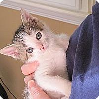 Adopt A Pet :: Cosmo - Kirkwood, DE