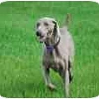 Adopt A Pet :: Maco - Eustis, FL
