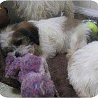 Adopt A Pet :: Lila - Antioch, IL