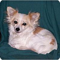 Adopt A Pet :: Calypso - San Angelo, TX