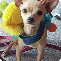 Adopt A Pet :: Frankie - AUSTIN, TX