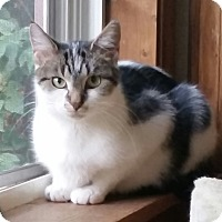 Adopt A Pet :: Delilah - Palatine, IL