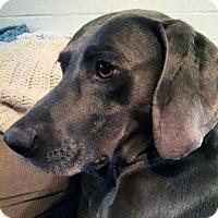 Adopt A Pet :: Pierre - Grand Haven, MI