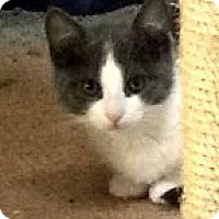 Adopt A Pet :: Beatrice - McHenry, IL