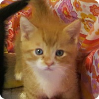 Adopt A Pet :: Dandy - Geneseo, IL