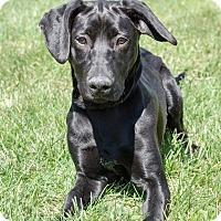 Adopt A Pet :: Trinity - Sherman, CT