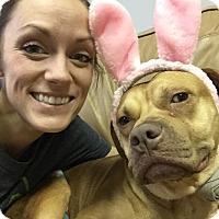 Adopt A Pet :: Honey - Dearborn, MI