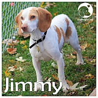 Adopt A Pet :: Jimmy - Novi, MI