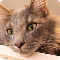 Adopt A Pet :: Greystoke - Ann Arbor, MI