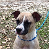 Adopt A Pet :: Lovey - Columbia, SC