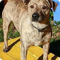 Adopt A Pet :: Tigger - Tomball, TX