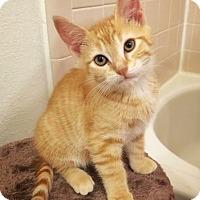 Adopt A Pet :: Beto - Arlington/Ft Worth, TX