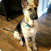 Adopt A Pet :: Tucker - Dripping Springs, TX