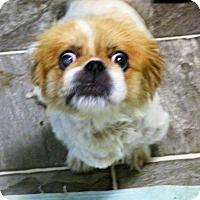 Adopt A Pet :: Daisy - Oakdale, TN