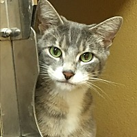 Adopt A Pet :: Isabella - West Dundee, IL