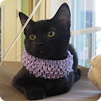 Adopt A Pet :: Georgia - High Point, NC
