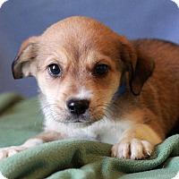 Adopt A Pet :: Elijah - Waldorf, MD