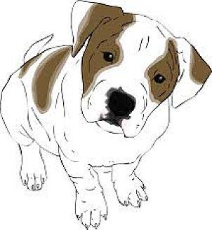 American Bulldog Mix Dog for adoption in San Bernardino, California - URGENT on 10/15 SAN BERNARDINO
