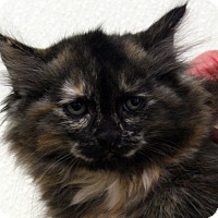Adopt A Pet :: Mauve - Republic, WA