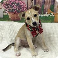 Adopt A Pet :: SIMBA - Fort Pierce, FL
