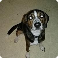 Adopt A Pet :: Rajesh Koothrappali - Newport, KY