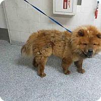 Adopt A Pet :: BEAR - Long Beach, CA
