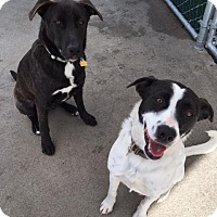Adopt A Pet :: RILEY AND JOY - Sonora, CA