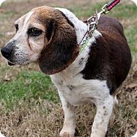 Adopt A Pet :: MeeMee~meet me~ - Glastonbury, CT