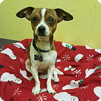 Adopt A Pet :: Arby - East Hartford, CT