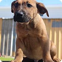 Adopt A Pet :: Ozzy - Meet Me - Glastonbury, CT