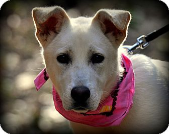Great Pyrenees/Labrador Retriever Mix Puppy for adoption in Sparta, New Jersey - Leah