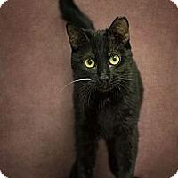 Adopt A Pet :: Kyra - Phoenix, AZ