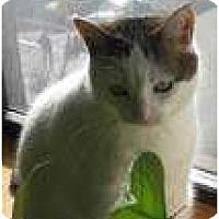 Adopt A Pet :: Mitsy - New York, NY