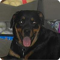 Adopt A Pet :: Tasha - Antioch, IL