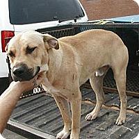 Adopt A Pet :: Mick - dawson, GA