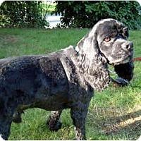 Adopt A Pet :: Darby - Tacoma, WA