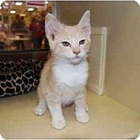 Adopt A Pet :: Niner - Modesto, CA