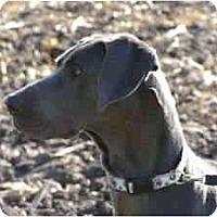 Adopt A Pet :: Maya - Rigaud, QC