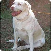 Adopt A Pet :: Sammie Y - Cumming, GA